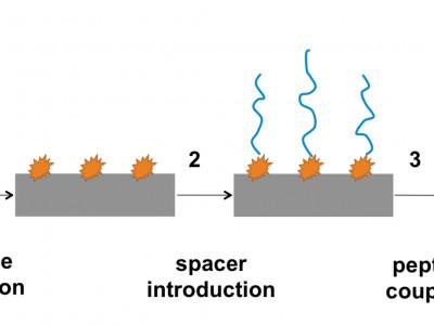 VascuGraft – surface modification of polyurethane vascular grafts